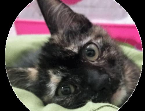 Dolcissimi gattini di tre mesi cercano casa all'Asta