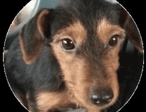 Roma, cucciola trovatella di 6 mesi cerca casa