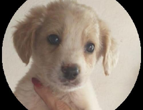 Cuccioli cercano casa ❤