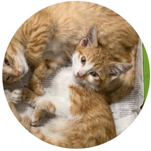 regalare-un-gatto