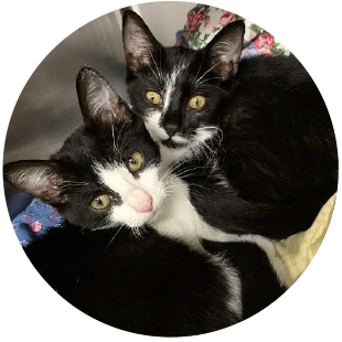 adozione-gatti-roma